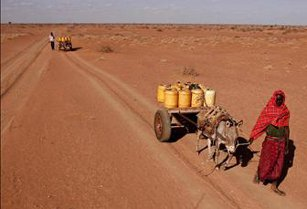 drought, Kenya, newfound, economic, resilience, means, good, news, growth